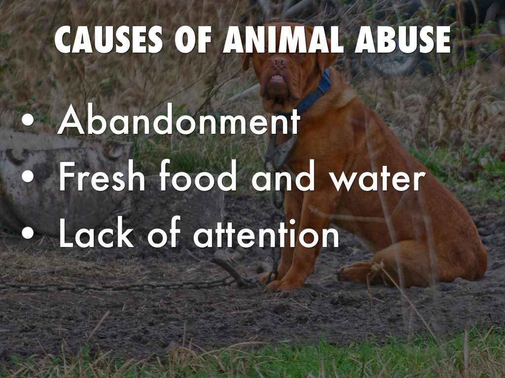 the different types of animal cruelty As stated earlier, passive cruelty also is a type of animal abuse a general neglect of pet animals can be dangerous for their health and in worst cases be life-threatening giving food to the pet animals in a timely manner is necessary many different health problems in animals can crop if proper care is not taken.
