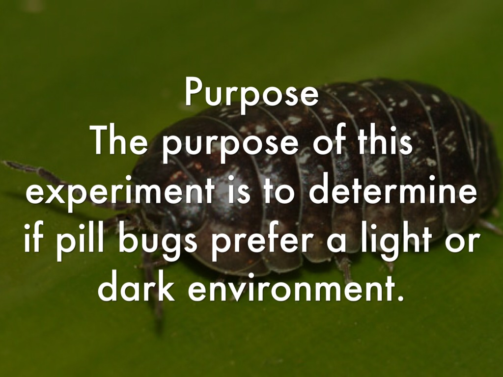 pill bugs preferences concerning a sheltered
