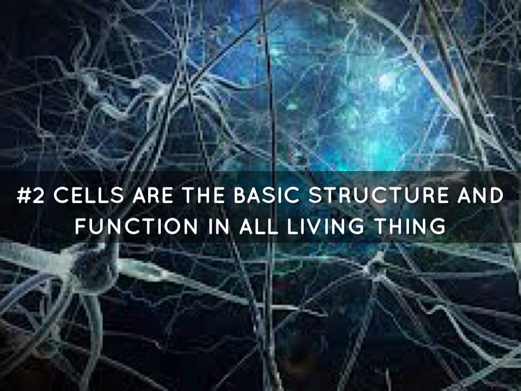 haiku on cell theory Directions: while &/or after watching the video, take the online haiku quiz worth 10 points (2 pts for each question.