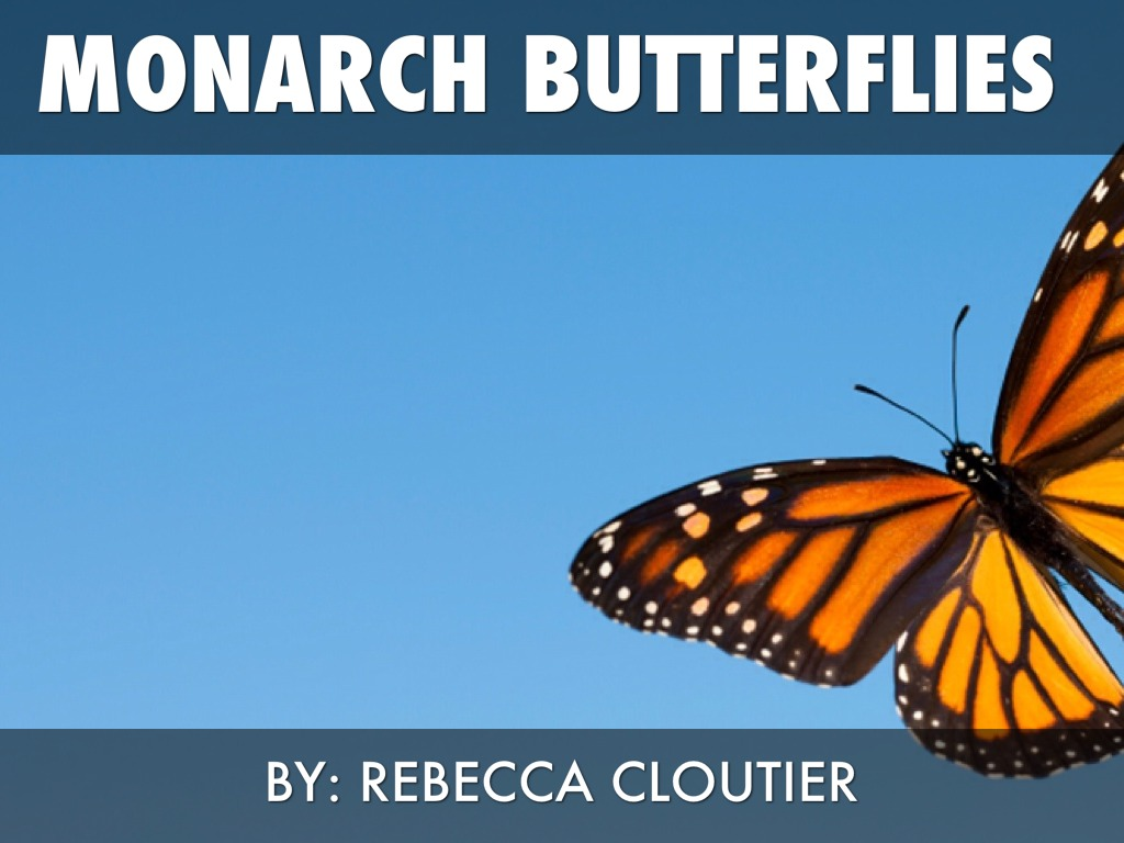 Monarch Butterflies-by: Rebecca Cloutier