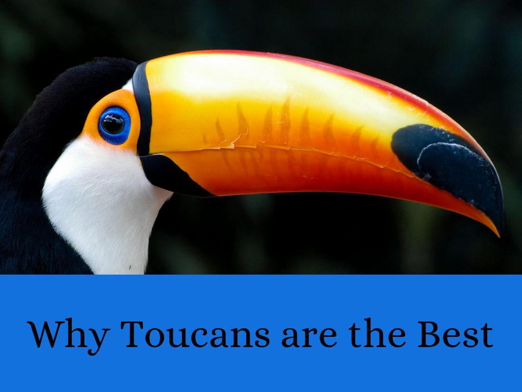 Toucans are Cool