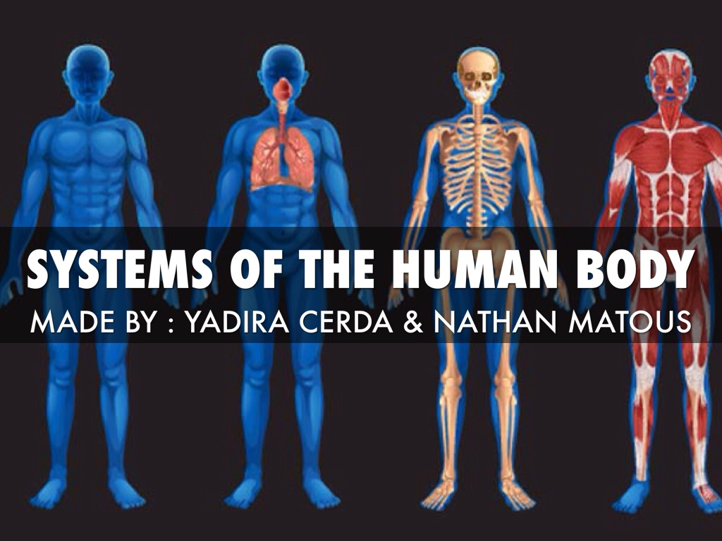 Systems Of The Human Body By Nathan Matous