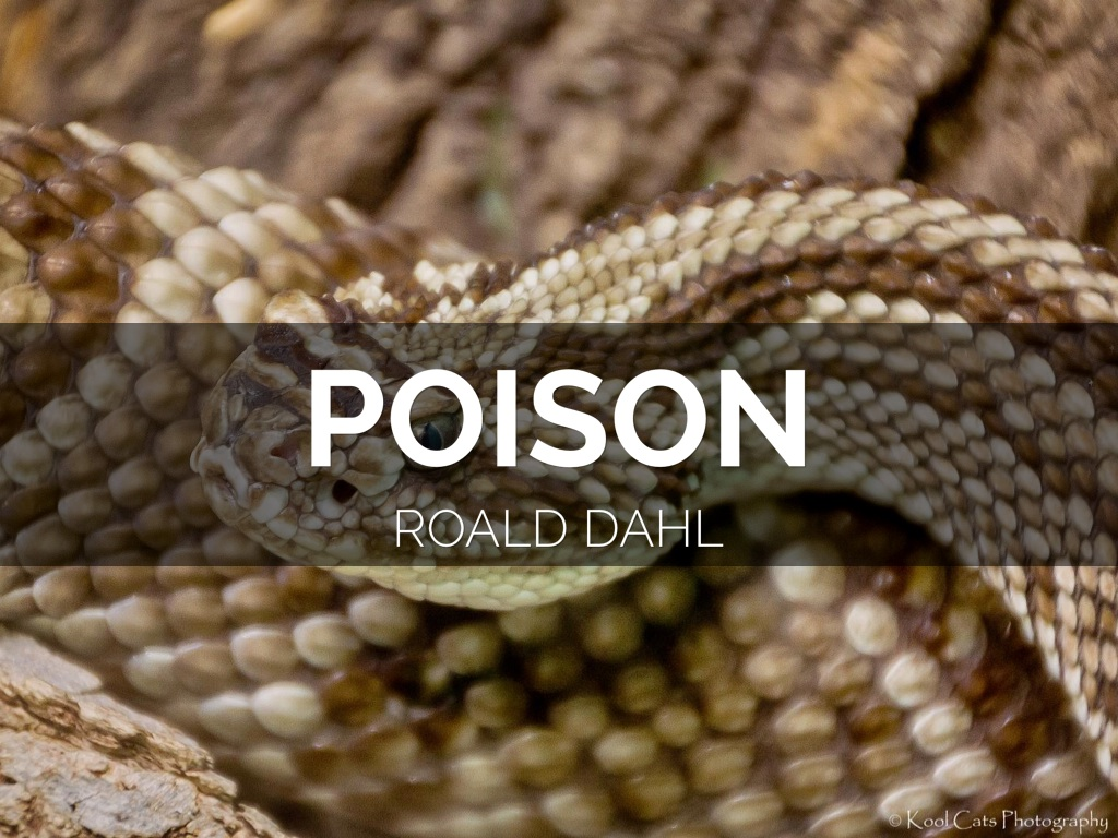 essay poison by dahl Related documents: matilda: roald dahl essay examples short story and surprising events essay in the story poison by roald dahl who is a very talented writer that has written many successful stories in the past.