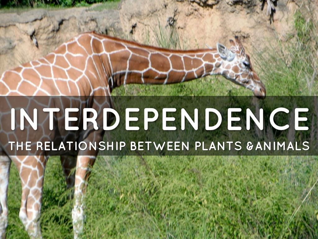 interdependence between plant and animals Interdependency between animal and plant species the community of organisms living in a biome are affected by abiotic.