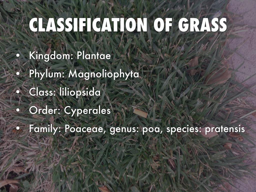 Genus classification