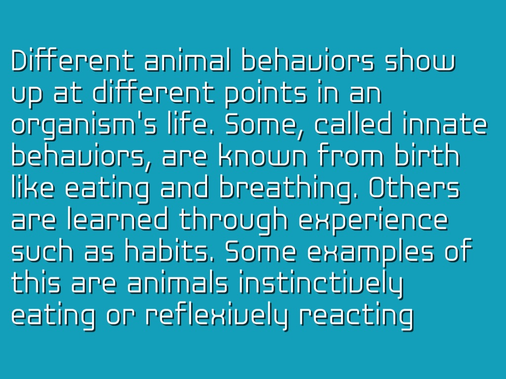 Animal Behavior By Fake Name