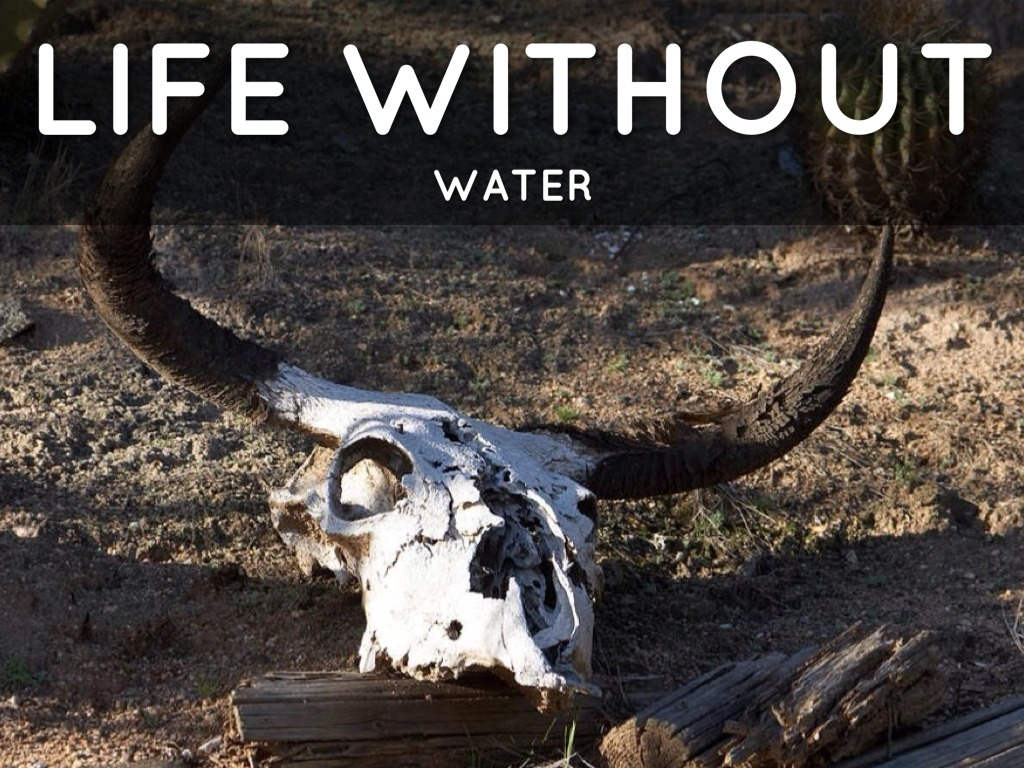 life without life Life without oil & natural gas is life without ______   featured video: life  without o&ng is life without glass blowing.