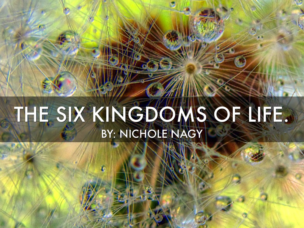 kingdoms of life 6 kingdoms of life •as living things are constantly being investigated, new attributes are revealed that affect how organisms are placed in a.