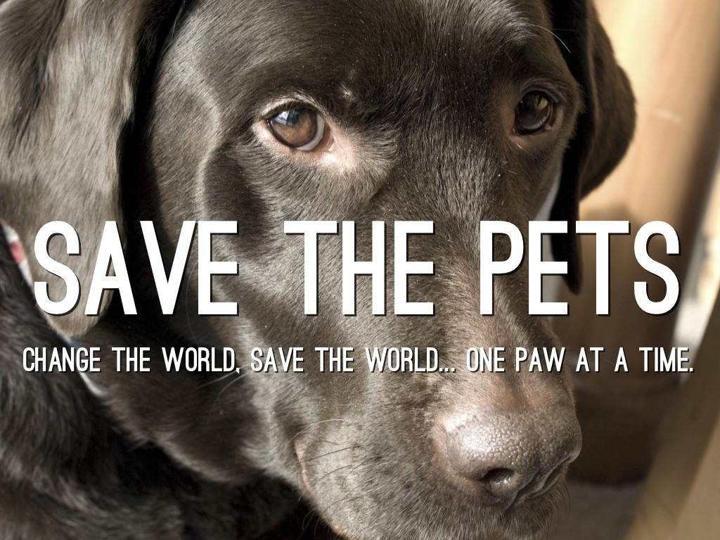 Save The Pets!