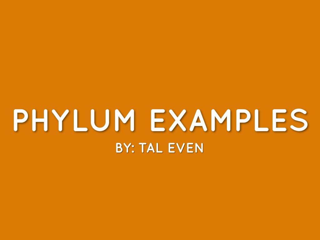 Phylum Characteristics Examples By Tal Even