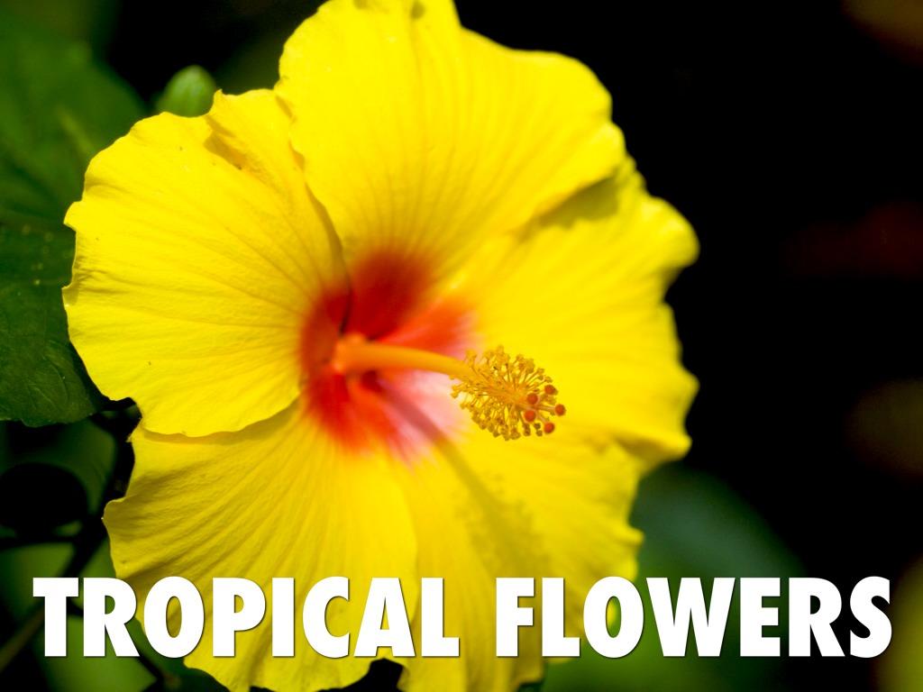 Tropical Rain Forest By Tajanay Quigley