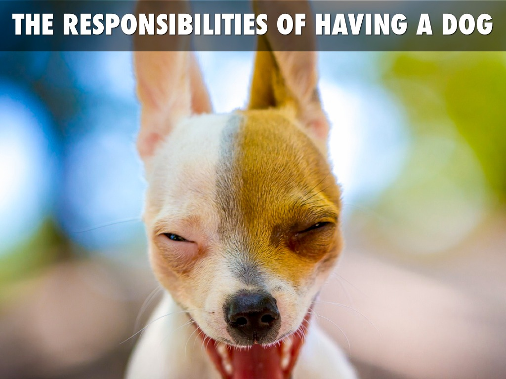 Dog Owner Responsibilities