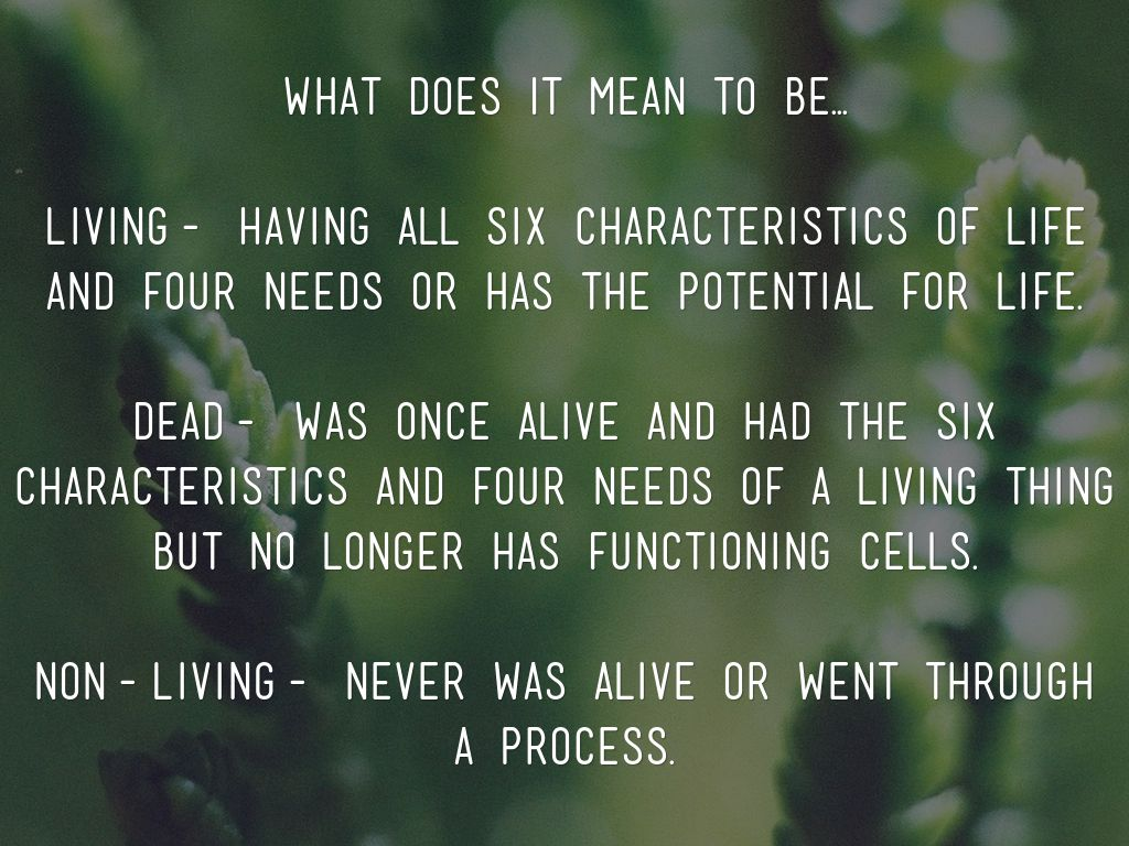 Copy Of Copy Of Copy Of Living Non Living Dead
