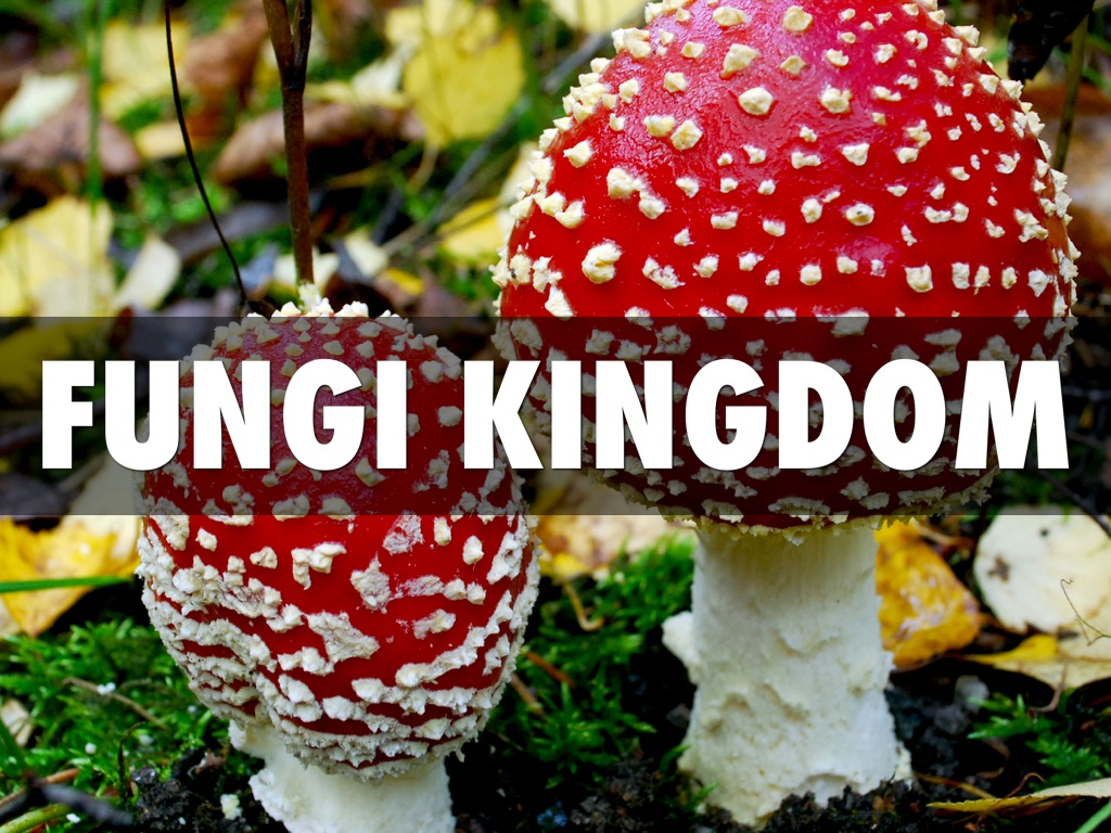 kingdom fungi The kingdom fungi includes a diverse group of organisms that are neither plant nor animal they absorb nutrition from other organisms while playing.