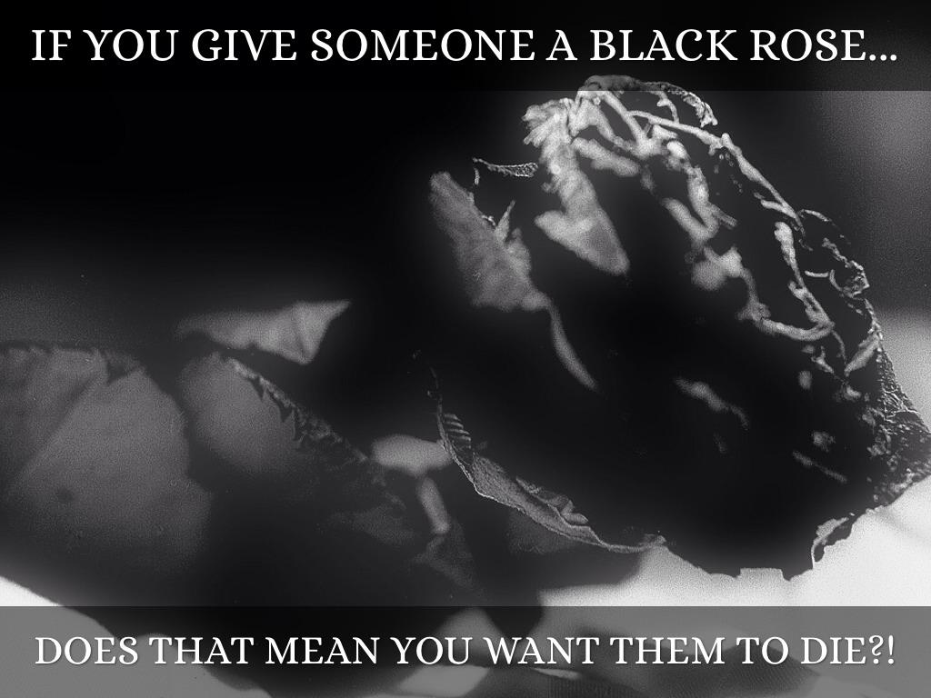 Roses by jen finkel martin if you give someone a black rose buycottarizona