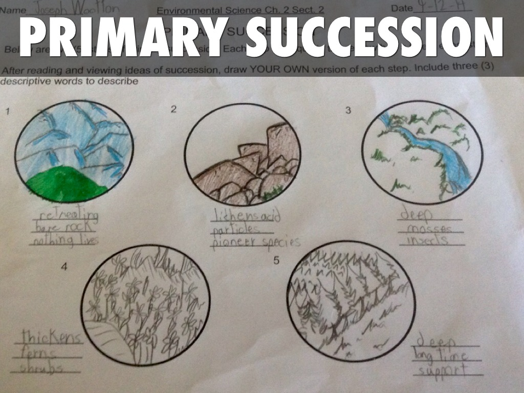 Primary Succession By Joseph Wootton
