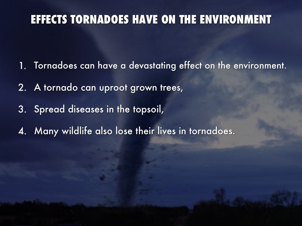 understanding the phenomenon of tornadoes and its devastating effects The tornado season of 2011 is already a record breaker is it due to global warming in this week's eskeptic, donald prothero takes a look at this phenomenon.