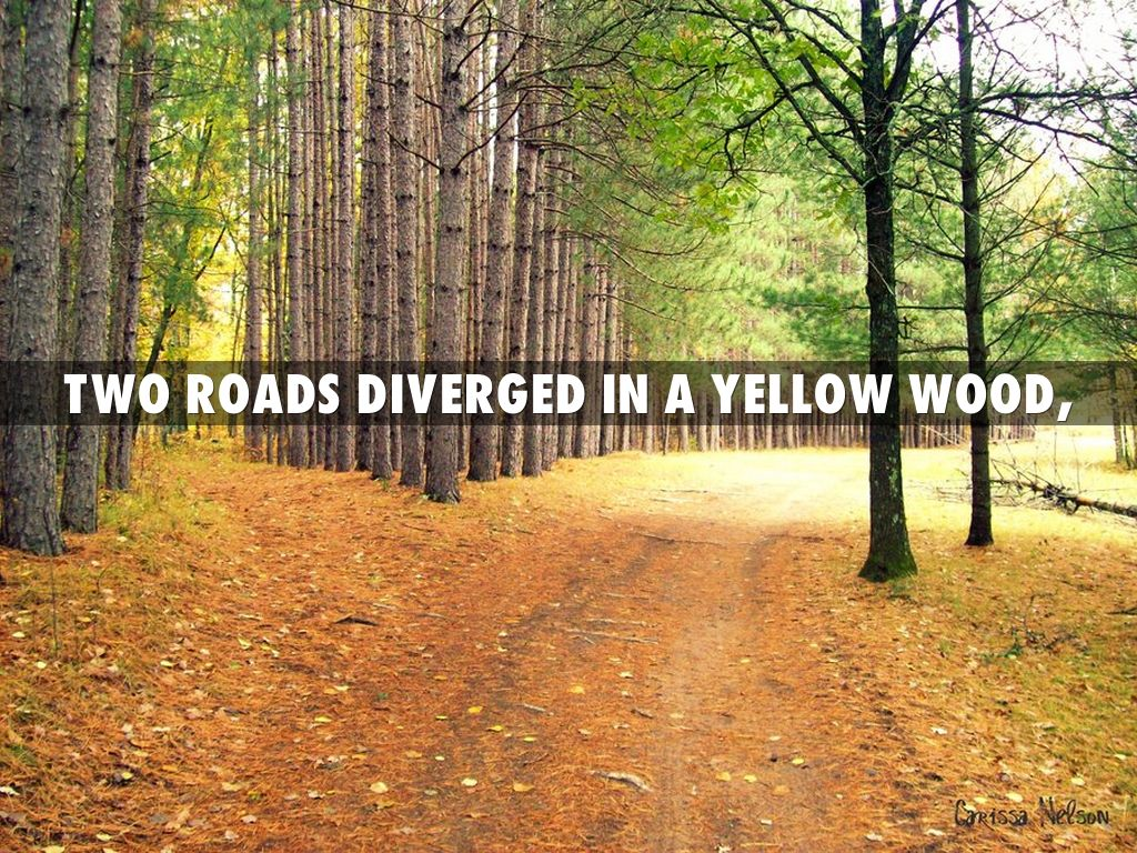 two roads diverged in a yellow wood by lindsey swiggum