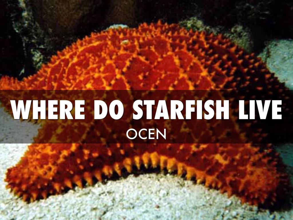 copy of star fish by kim broadhead