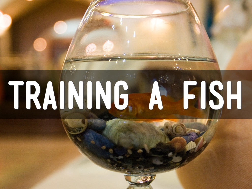 Training a Fish