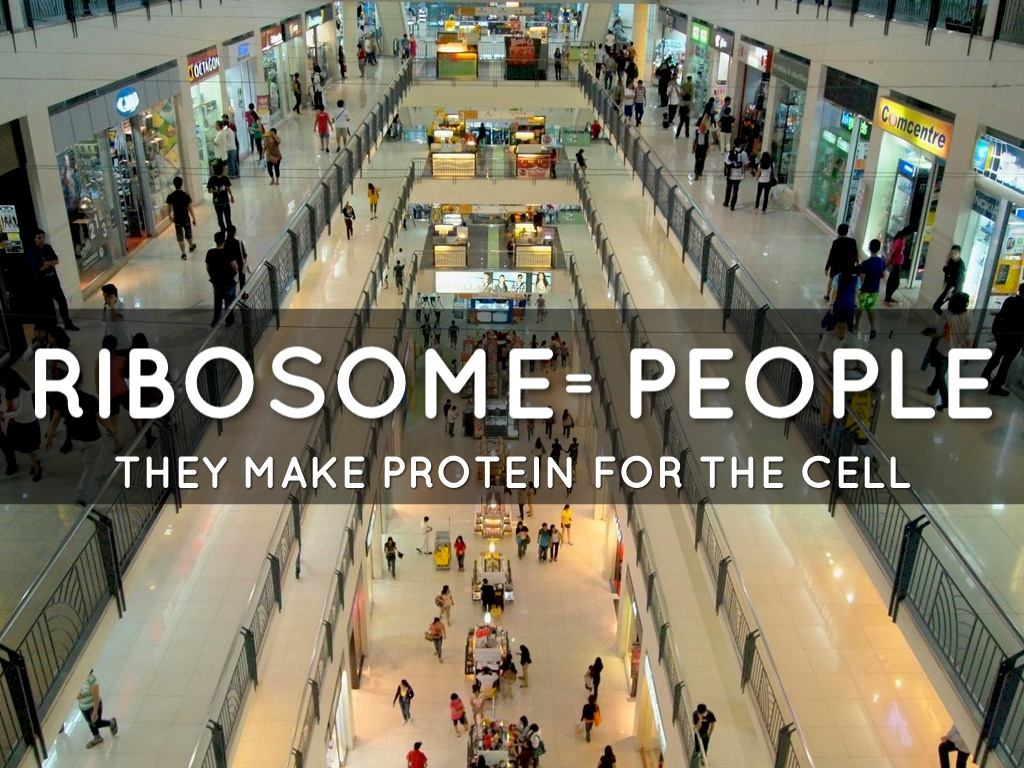 What is a good analogy for the ribosome?