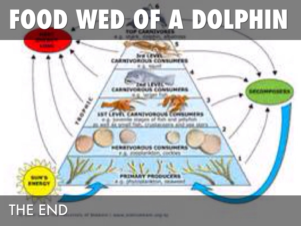 Food List Of What Dolphins Eat