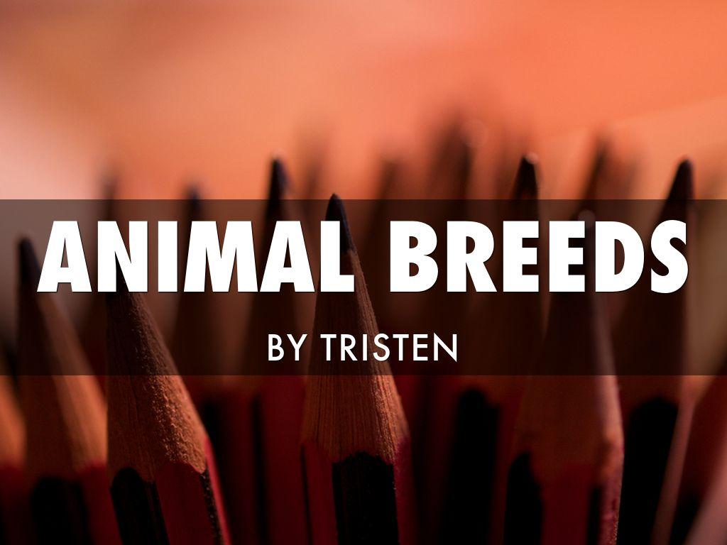Animal Breed Presentation