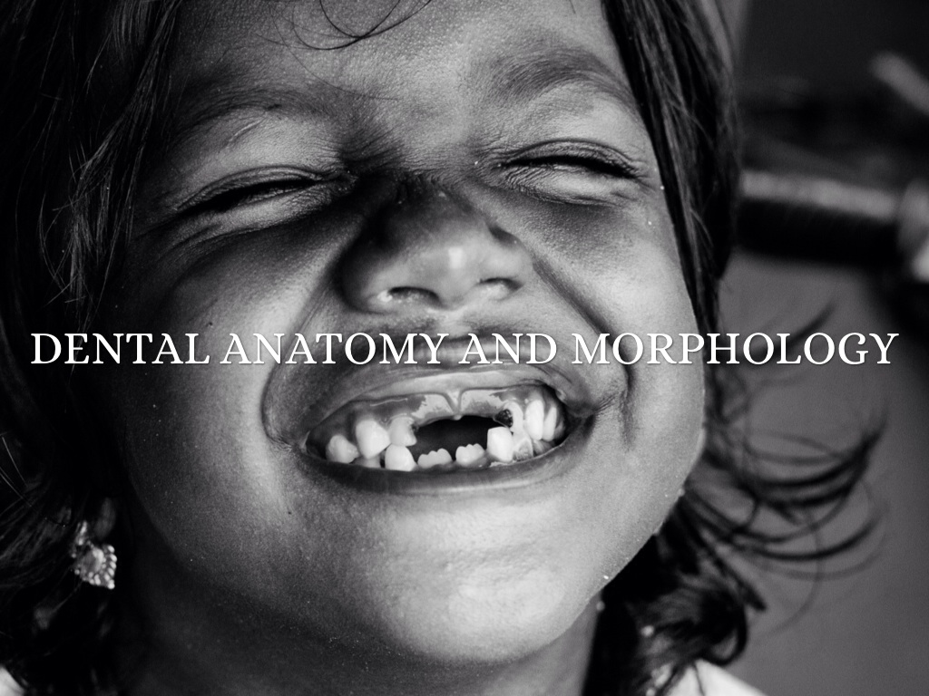 Dental Anatomy And Morphology by Holly Hilleman