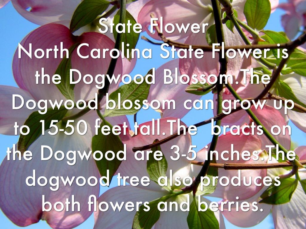 North Carolina State Flower Bird And Tree - Flowers Ideas