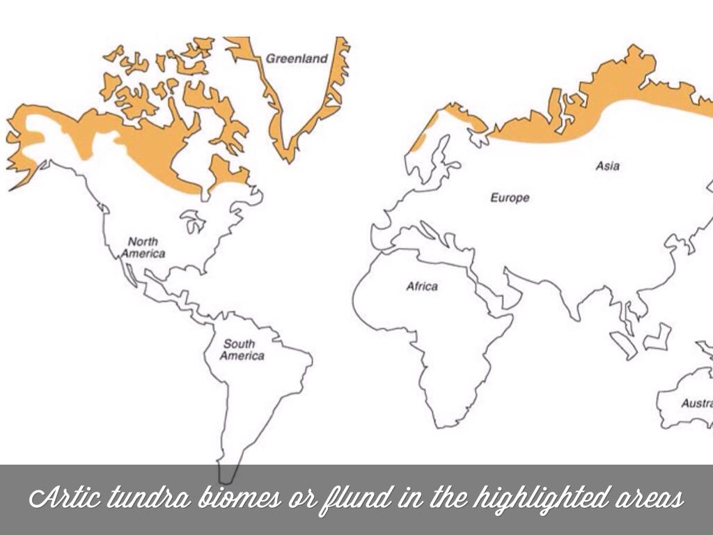 Где находиться тундра на карте