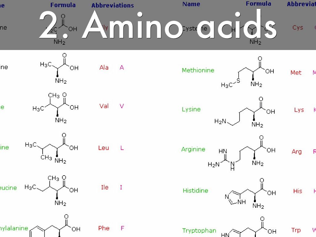 ammino acids Amino acids are the building blocks of proteins making up over three-fourths of the human body, amino acids are essential.