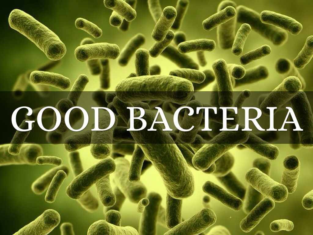 Role Of Bacteria By Bes0279