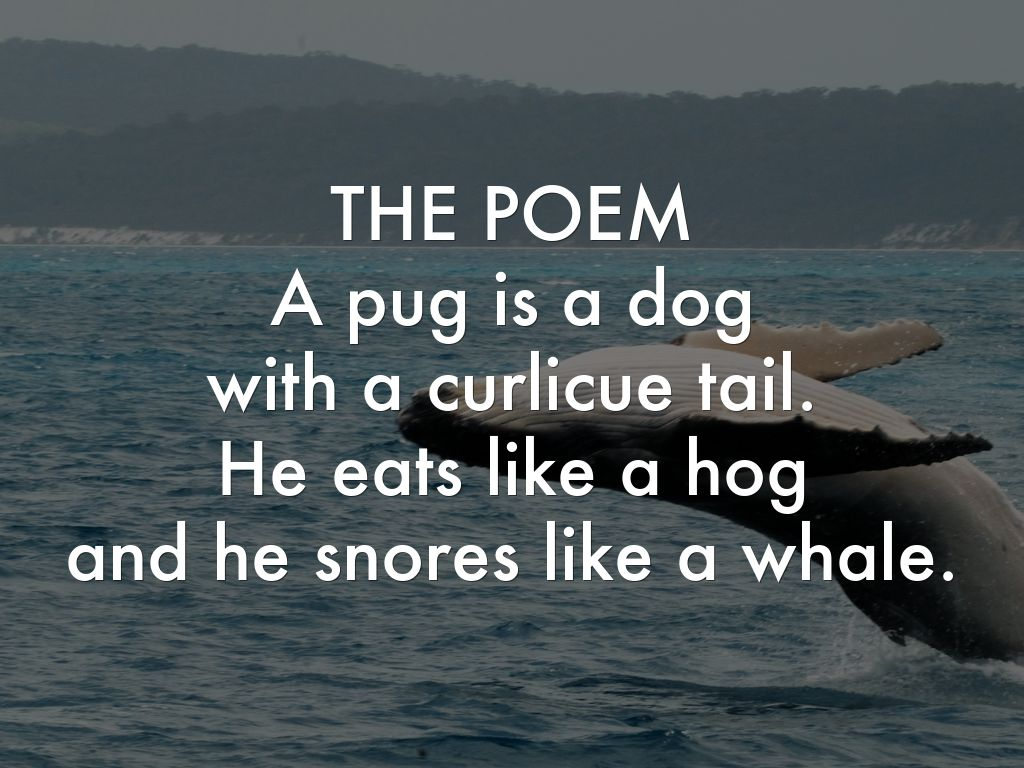 words that rhyme with pug a pug is a dog by gabby lacourse 9686