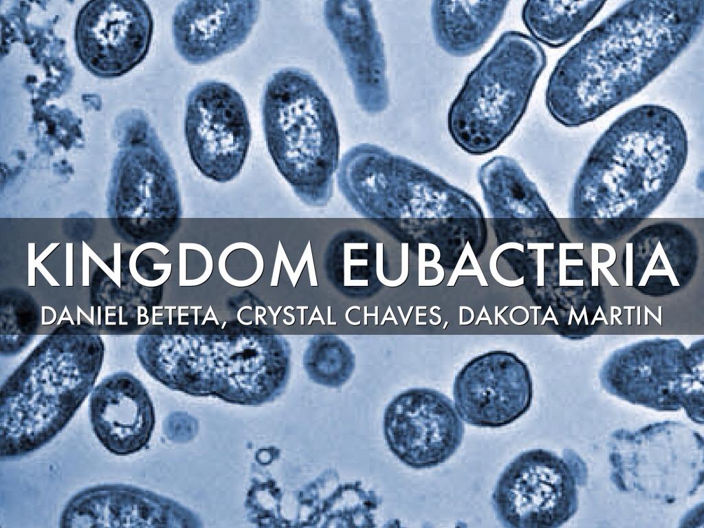 Kingdom Eubacteria by Daniel Beteta