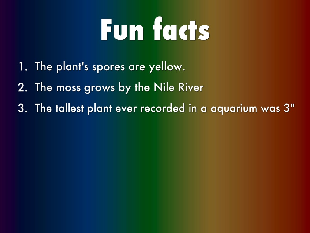 Plants Facts Best Fact 2017