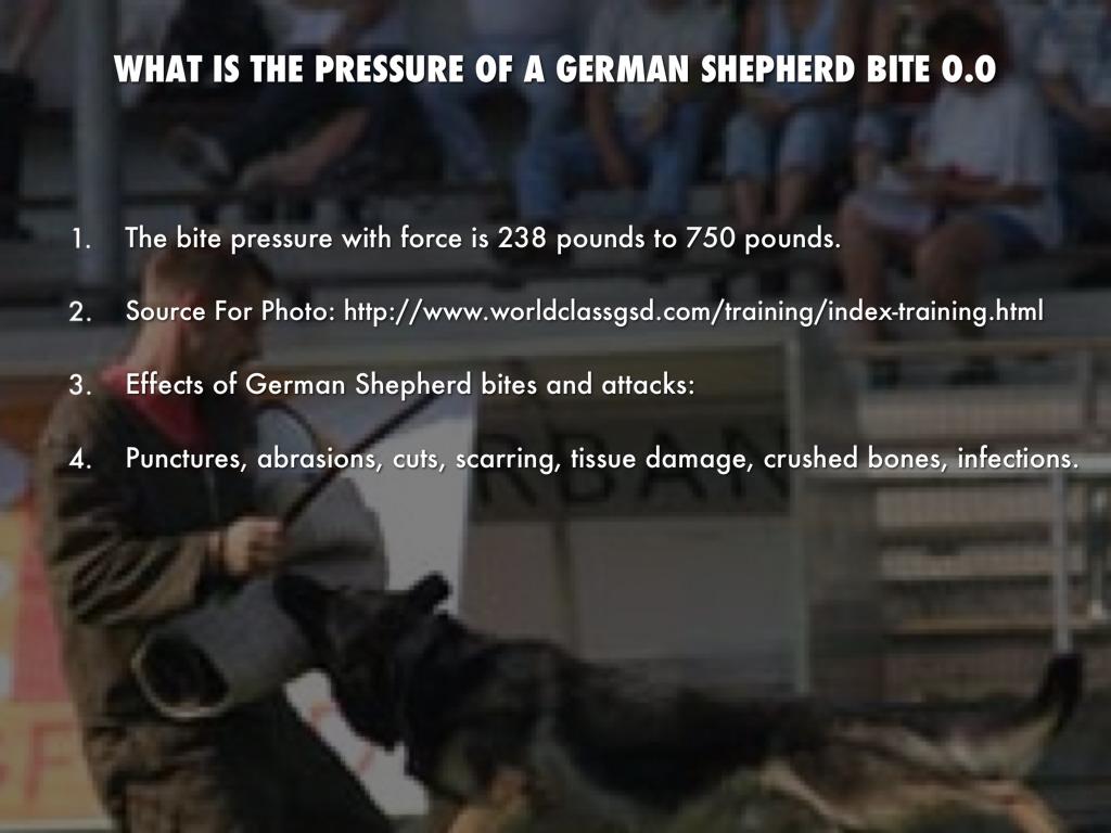 german shepherd by hope w