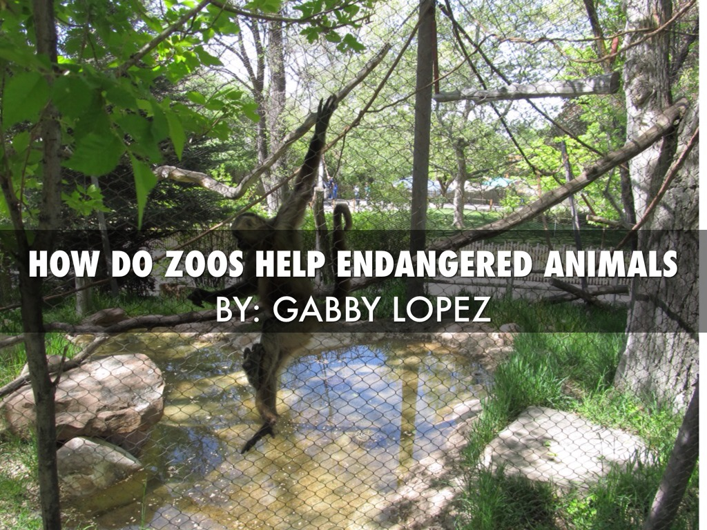 how do zoos help endangered animals