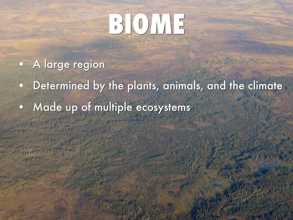 biome is a large ecosystem essay
