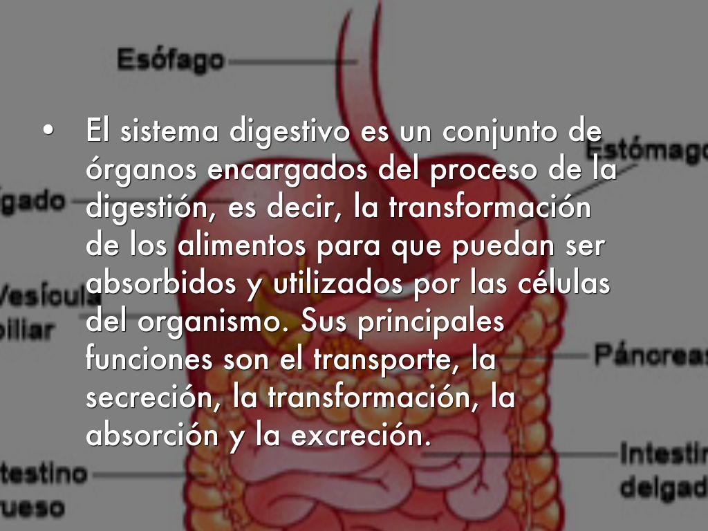 Copia de El Sistema Digestivo by Miguel Muñoz