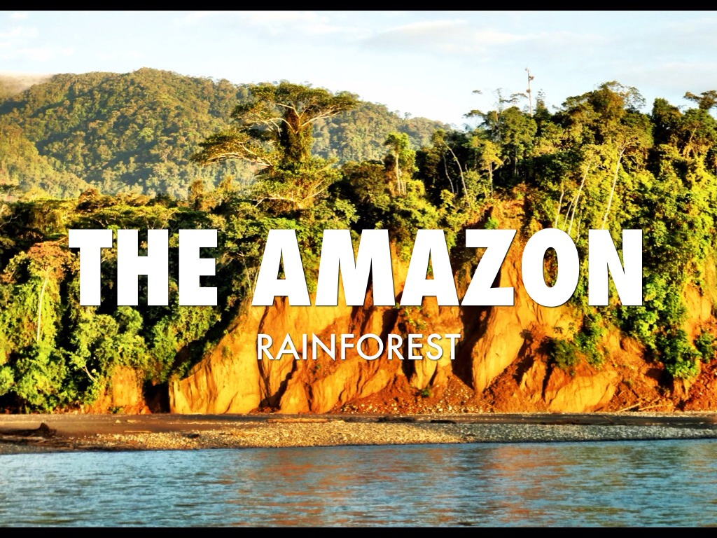 Amazon Rainforest By Cowen Dougherty