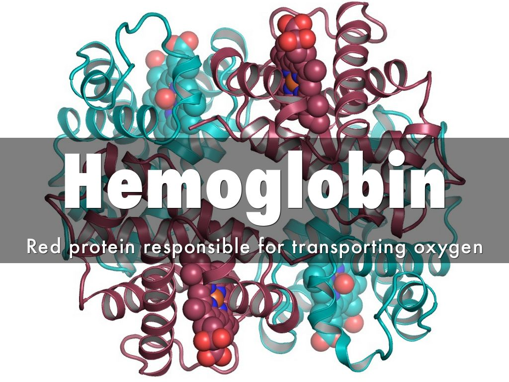 the importance of hemoglobin in transporting oxygen Best answer: importance of circulatory system ( blood circulatin is presumed)===== 1 ) supply of oxygen to tissues (bound to hemoglobin.