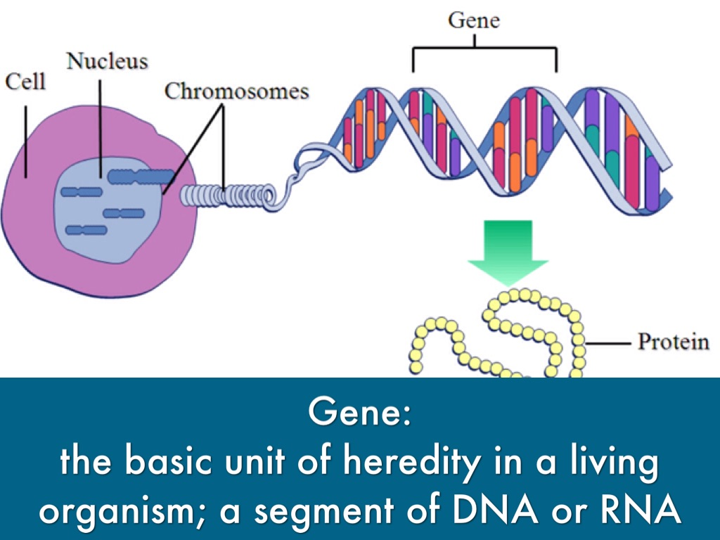 an analysis of a genetic condition involving an extra chromosome Dna test involving accurate analysis which is the most common chromosomal disorder, is a genetic disorder either with missing or an extra sex chromosome.