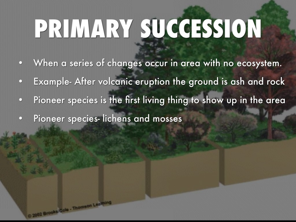 Examples Of Primary Succession Choice Image Example Cover Letter