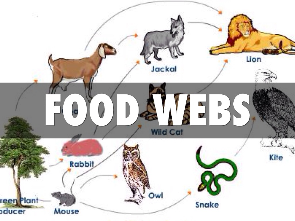 Food Chain Consumers List