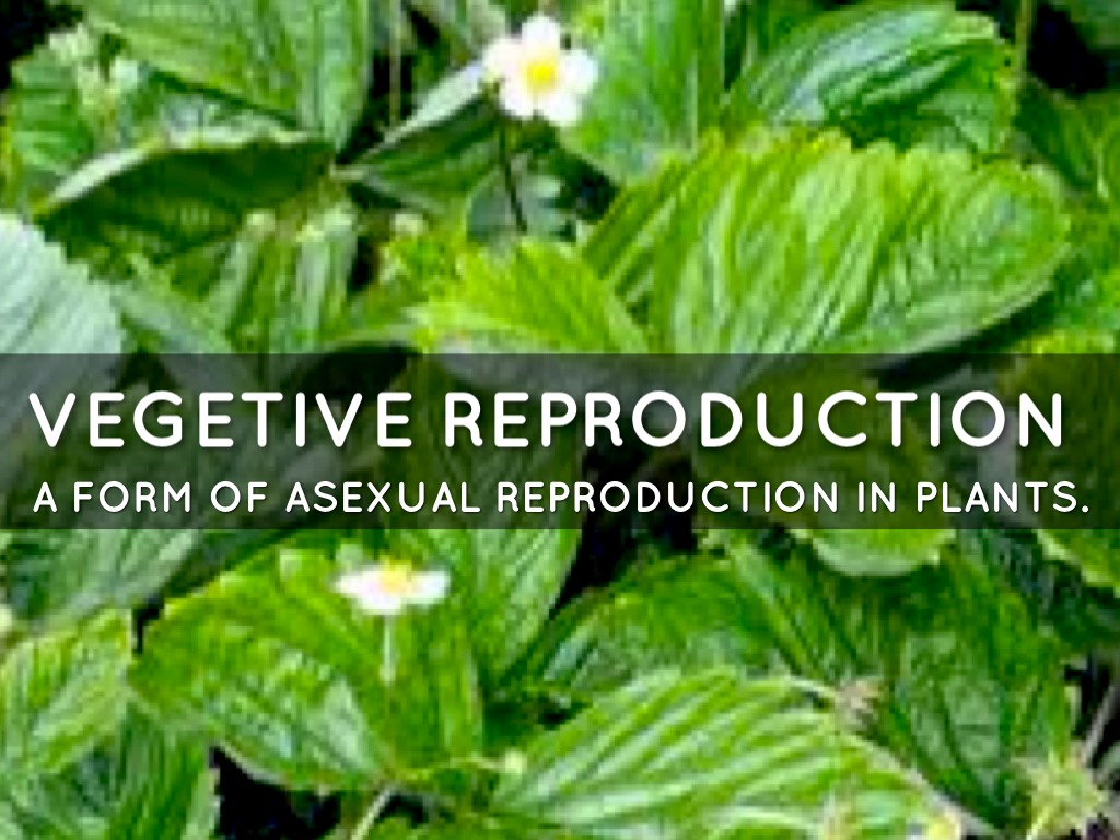 Asexual Reproduction. by Alena Cassel