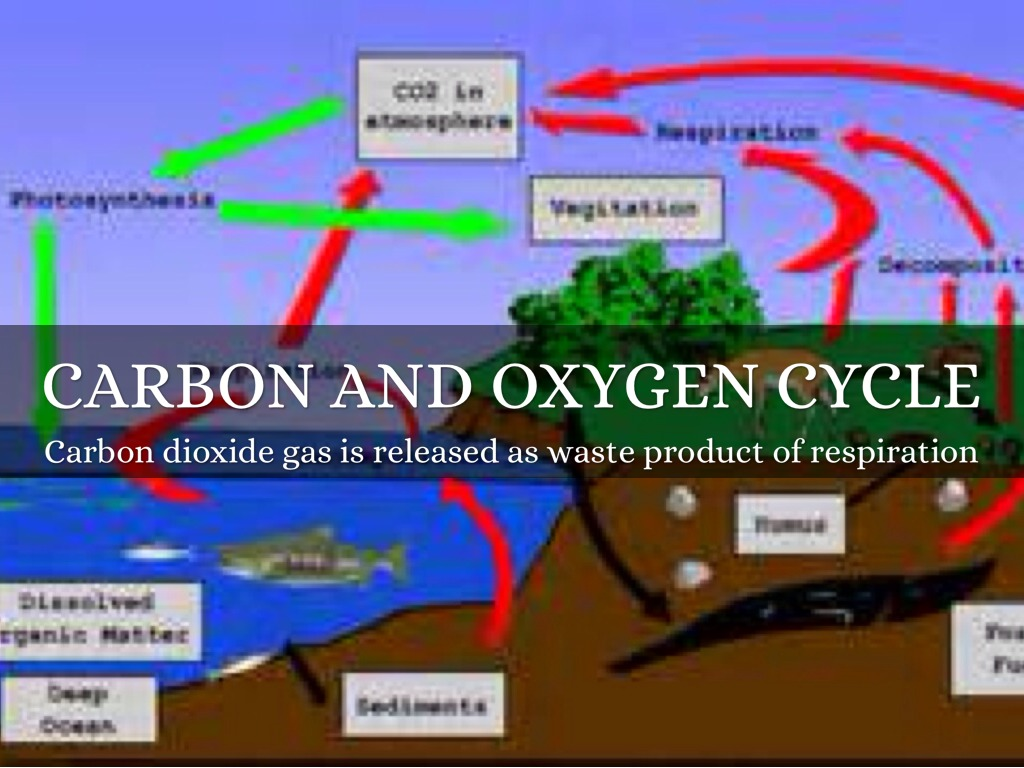 the oxygen carbon cycle Carbon cycle definition is - the cycle of carbon in the earth's ecosystems in which carbon dioxide is fixed by photosynthetic organisms to form organic nutrients and is ultimately restored to the inorganic state (as by respiration, protoplasmic decay, or combustion).