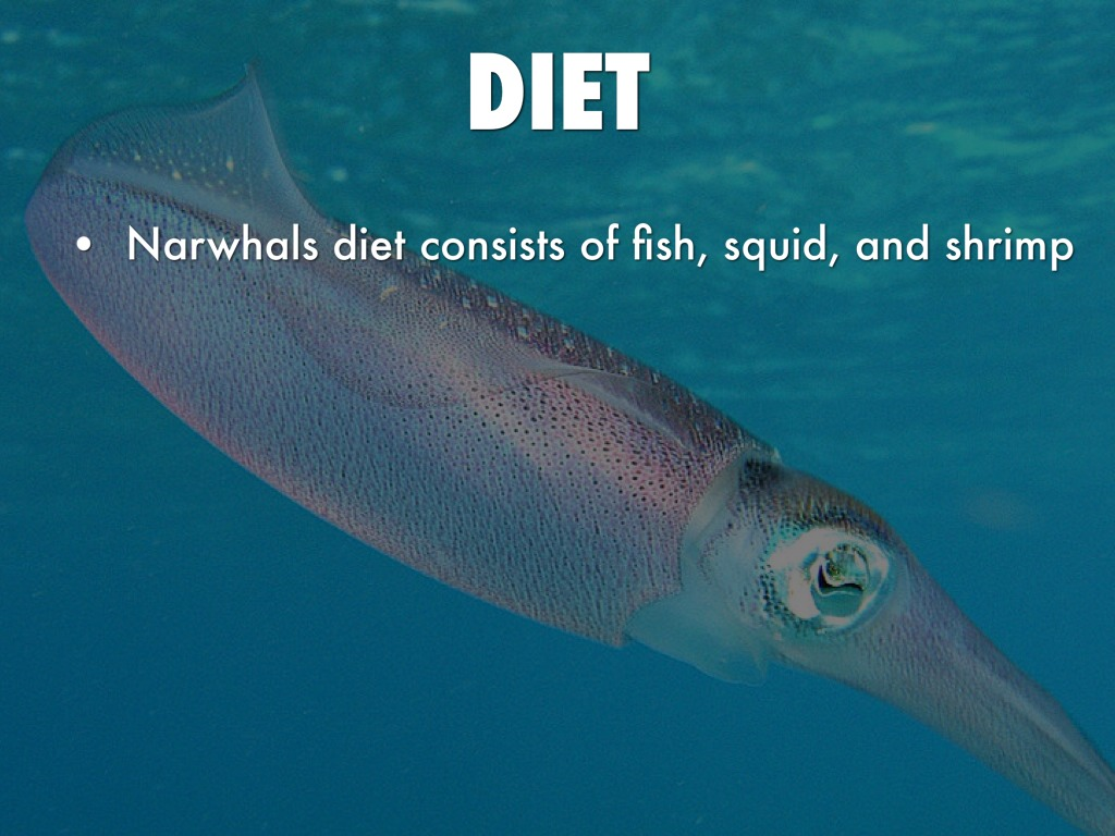 Narwhals Eating Fish image info