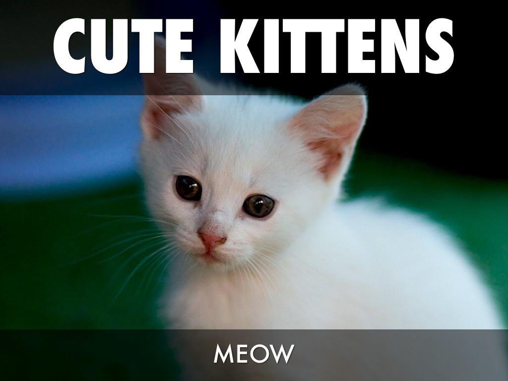 Cat Meow Loop