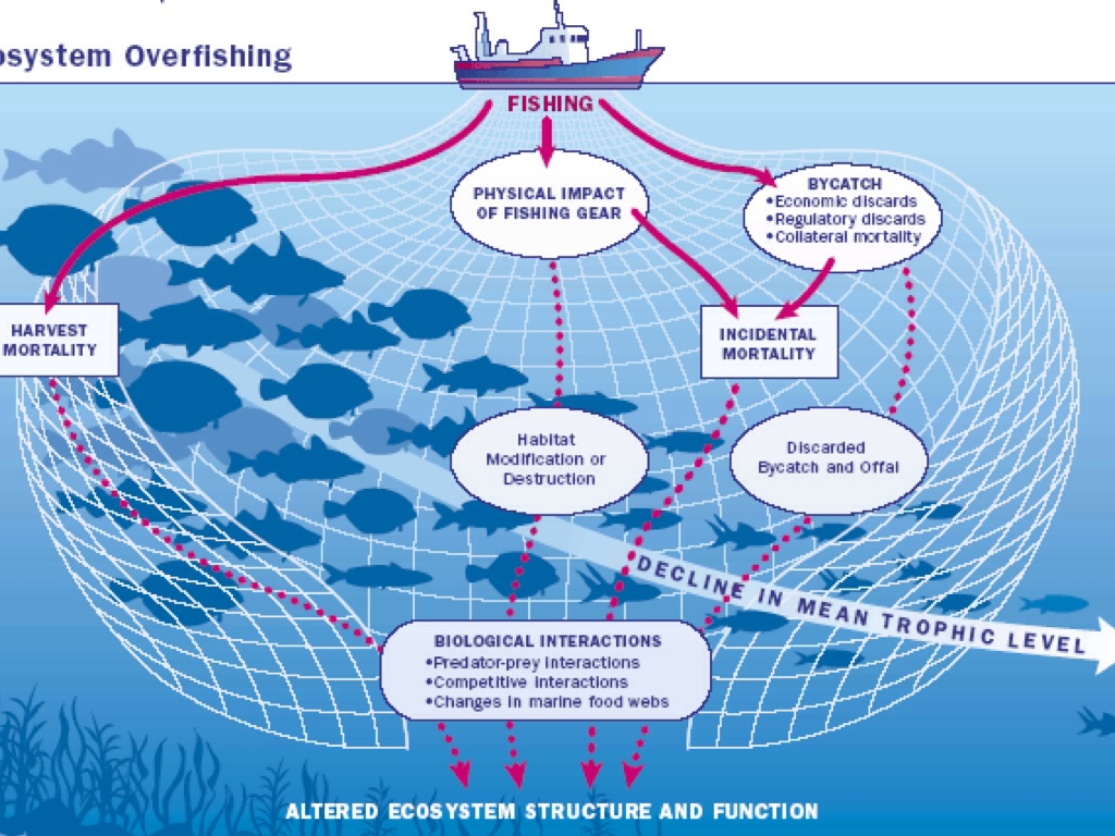 overfishing fish and n d web The ocean it covers 70 percent of the planet and shelters an incredible diversity of life it gives us food, jobs, and more than half the oxygen we breathe we swim and sail it, travel to be near it, and learn from it but we're taking too many fish out of the ocean, polluting it, and making it.