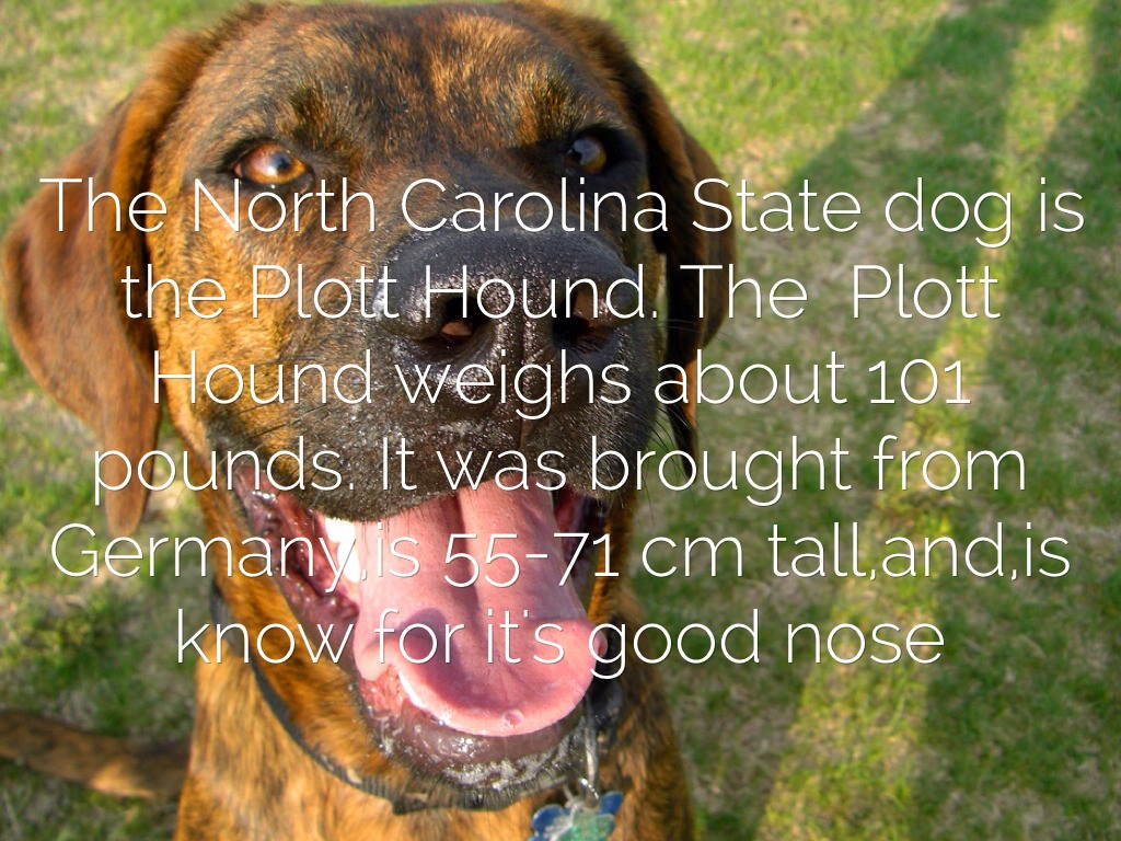 North carolinas symbol project by madgre8792 the north carolina state dog is the plott hound the plott hound weighs about 101 pounds it was brought from germanyis 55 71 cm tallandis know for its buycottarizona